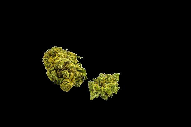 Ghost OG strain
