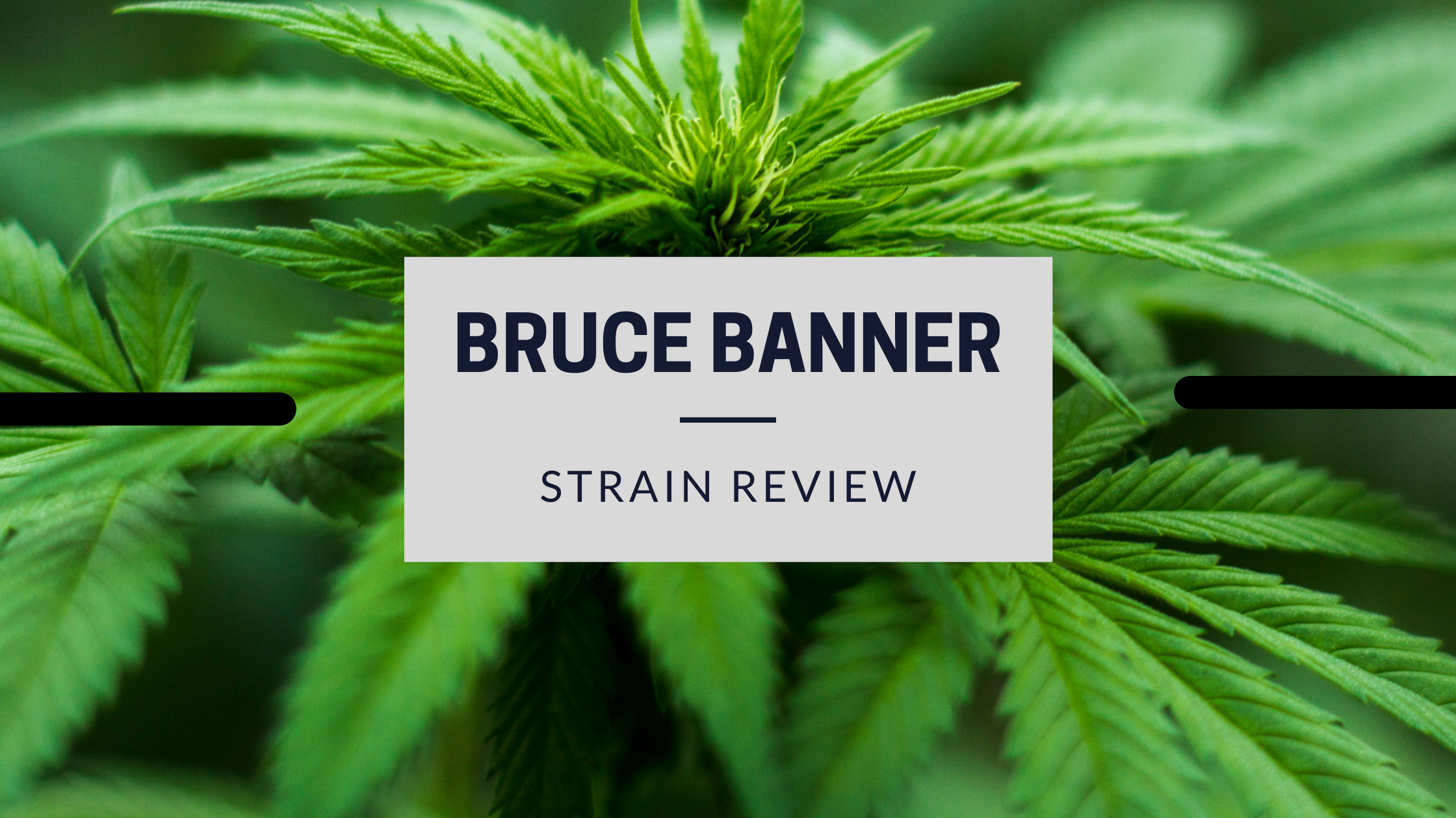 Bruce-Banner-review