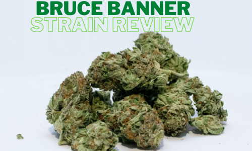 bruce-banner-strain-review