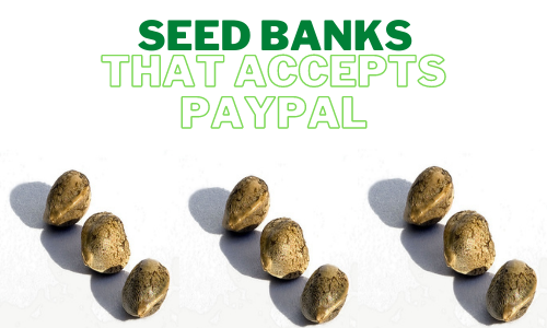 marijuana-seed-banks