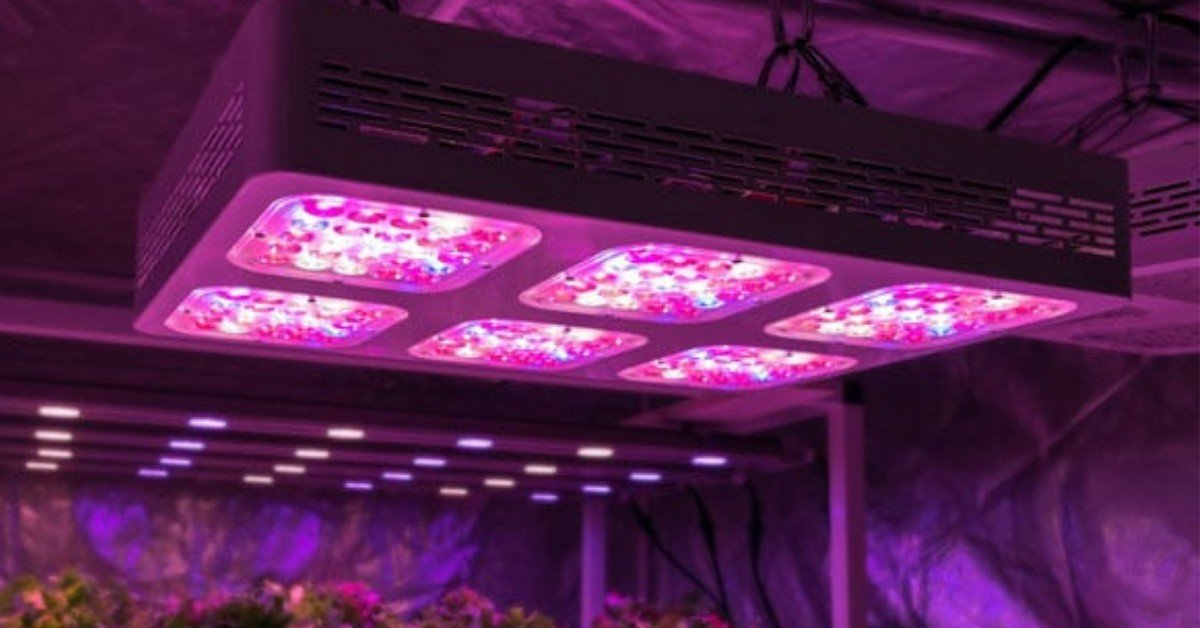 Best LED Grow Lights for Growing Cannabis Indoors_ Our Guide