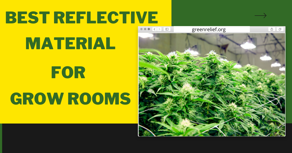 Best Reflective Material for Grow Rooms