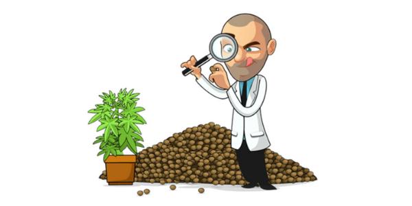 Marijuana seed reviews
