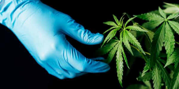 marijuana-growing-advance-technique