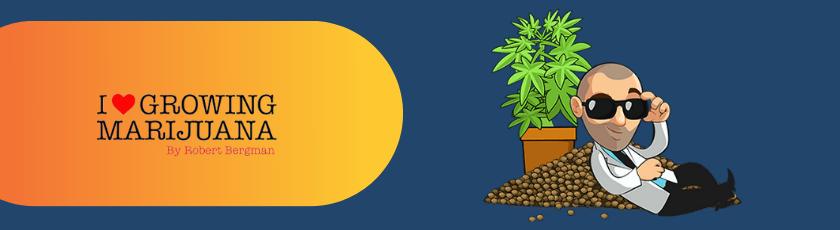 Marijuana Seeds By ILGM