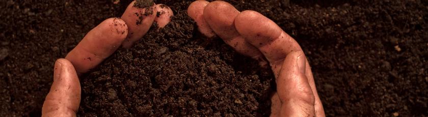 Soil For Growing Autoflower Cannabis Plants