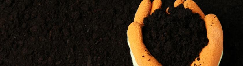 Soil For Growing Autoflower Marijuana Plants