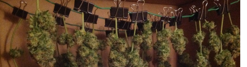 Drying Weed